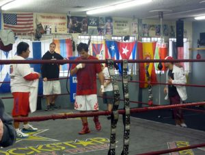 Wildcard Boxing Club